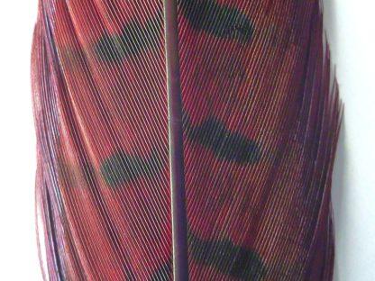 plume de faisan