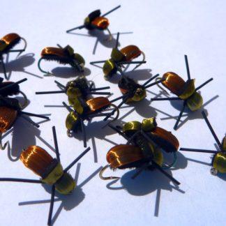 coléoptere